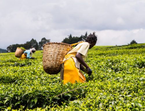 How To Break Down Discrimination Barriers For Women In Agriculture