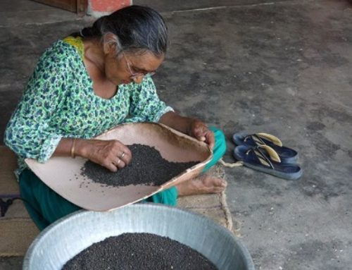 Bija Devi : Navdanya's Seed Keeper of 16 Years At The Biodiversity Conservation Farm