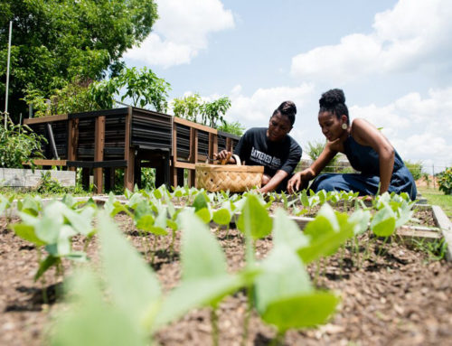 Jilian Hishaw Wants To Help Black Farmers Stay On Their Land