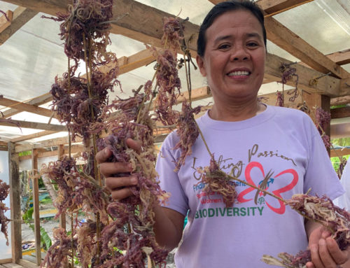 Small-Scale Women Seaweed Farmers Ride the Rough Tides of Climate Change